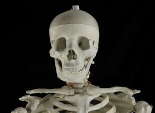 Smiling Skeleton portrait
