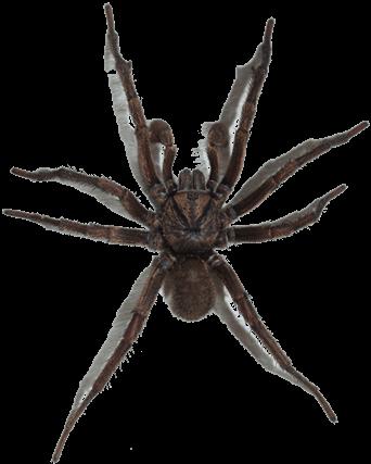 A Spiders sticky Web
