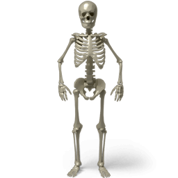 Halloween with Skeletons