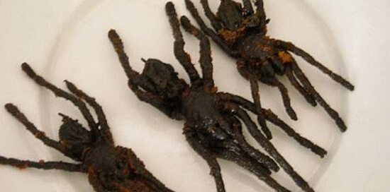 Tarantulas for eating