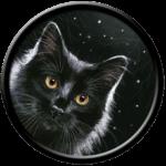 Black Cat and Stars