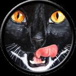 Black Cat, licking