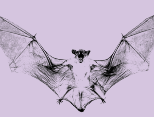Vampire Bats – Are They Really Monsters?
